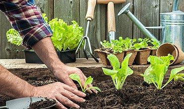 Prerana Gardening